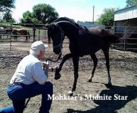 Mohktar's Midnite Star and Mark M Hanna