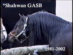 *Shahwan GASB 1981-2002