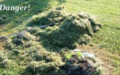 BEWARE the Danger of Feeding Lawnmower Clippings